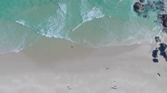 Smooth aerial pan over the beach with a running dog - Full HD Drone Footage Stock Footage