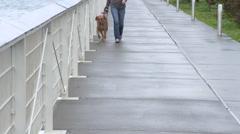 Woman Walks Dog on Sidewalk Arkistovideo