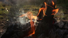 The fire in the forest. Stock Footage
