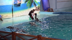 Dolphin drawing in the dolphinarium Stock Footage