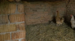 Inside a Traditional Kennel Stock Footage