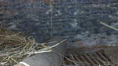 Farm Birds Eggs in Nest Stock Footage
