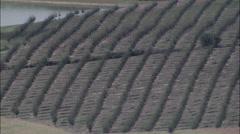 Vinyards aerial Stock Footage