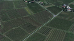 Vinyards aerial Stock Footage