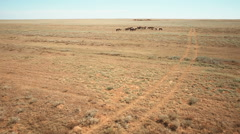 Herd of horses to pasture in the steppe Stock Footage