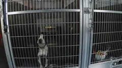 Pan Shot - Row Of Dog Cages At Animal Shelter - Downey CA Stock Footage