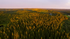 View from a height of forest in sunset time Stock Footage