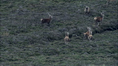 Red Deer Sequence Around Beinn A'Ghlo Stock Footage