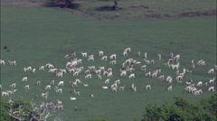 Deer In Park At Helmingham Hall Stock Footage