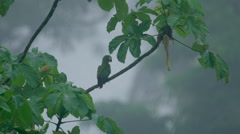 Red and green macaw sitting on branch Stock Footage
