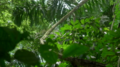 Panoramic view of the Peruvian rainforest - stock footage