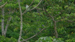 Macaws sitting on tree in the Peruvian rainforest Stock Footage