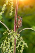 Cicada, green, background Stock Photos