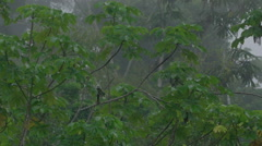 Red and green macaw in the Peruvian rainforest Stock Footage
