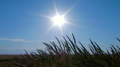 Field grass swaying in the background of the sun. Real time. Stock Footage