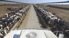 On top of truck driving through dairy paddock Stock Footage