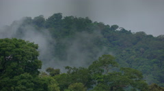 A rainy day in the Peruvian rainforest Stock Footage