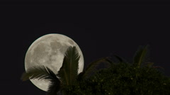 Full Moon Timelapse Palm Trees Stock Footage