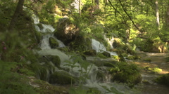 Whitewater river cascades flowing through the lush green forest in spring - stock footage