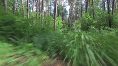 Camera movement from below for overgrown path through trees in forest - stock footage