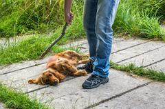 Man holds a stick in hand and he wants to hit the dog - dog abuse Stock Photos