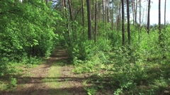 Travel among the trees growing in wild on walking trail Stock Footage
