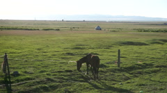 Horse grazing on pasture Stock Footage