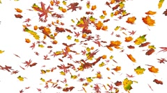 Flying oak and maple leaves. Autumn, fall background. Slow motion animation. - stock footage