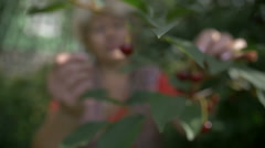 A Woman harvests cherries in the garden, slow motion Stock Footage