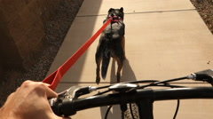 Dog Runs While Pulling Bicyclist  	 Stock Footage