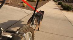 Dog Pulls Bicyclist on Arizona Sidewalk   Stock Footage
