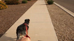 Dog Pulls Bicycle Rider on Arizona Neighborhood Sidewalk  	 Stock Footage
