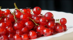 Red Currant Close Up Stock Footage