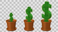 Concept: cactuses shaped as dollar turn around. 3D rendering. Stock Footage