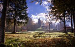 Golden morning sun rays on green grass in autumn Stock Photos