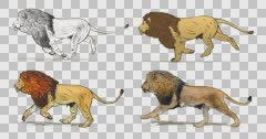 Cartoon lion running. Animation cyclical and contains an alpha channel. - stock footage