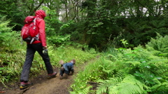 A hiker walking through wet woodland Stock Footage