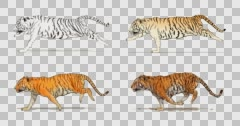 Cartoon tiger running. Animation cyclical and contains an alpha channel. Stock Footage