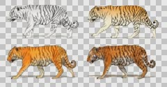 Cartoon tiger walking. Animation cyclical and contains an alpha channel. Stock Footage