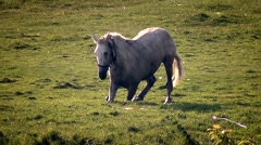 Horse Meadow tumbles Stock Footage