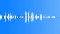 Swallow bird talking chirping - sound effect