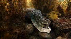 Seaweed pan to cuttlefish Stock Footage
