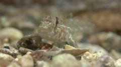 Tiny fish on small shells Stock Footage