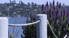 Hillside landscape seen from Sausalito, California Stock Footage
