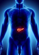 3D illustration of Pancreas - part of digestive system. Stock Illustration