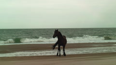 Beautiful alert wild stallion high winds sand ocean Stock Footage
