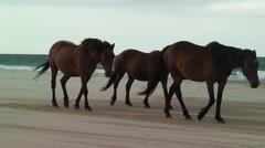 Wild horse herd walks beach high winds sand Stock Footage