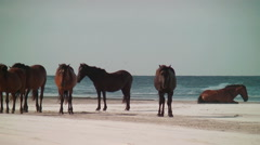 Wild horse herd by the sea Stock Footage