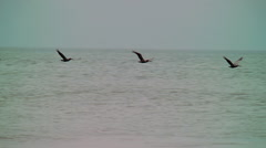Brown pelicans fly gracefully over crashing waves Stock Footage
