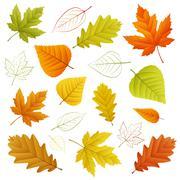 Autumn vector leaf Stock Illustration
